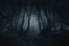 Nightmare forest with creepy trees Royalty Free Stock Photos