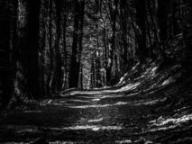 Dark forest with bright path royalty free stock images