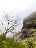 Nightmare trees Stock Photos