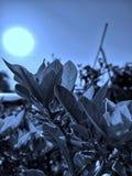 Nightmode klick & redigera naturskönhet arkivbild