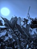 Nightmode-Klicken u. Redigieren von Naturschönheit stockfotografie