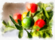 Nightshade berries, solanum pseudocapsicum Stock Photo