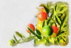 Nightshade berries, solanum pseudocapsicum Royalty Free Stock Photo
