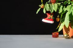 Nightshade Christmas tree with red Xmas boot, ball and gift box. Green pot plant Nightshade with berries and red Christmas. Decoration on dark background stock images