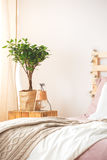 Nightstand with plant and lamp Stock Photography
