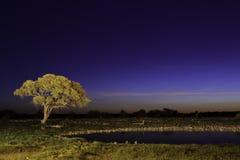 Nighttime i etosha Arkivfoton