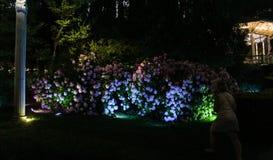 Nighttime parkowy oświetlenie Zdjęcie Stock
