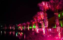Nighttime promenade. Palms under purple light in nighttime Florida royalty free stock images