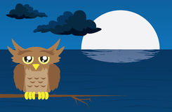 Nighttime Scene with Owl Royalty Free Stock Photography