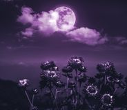 Nighttime sky with clouds and full moon with shiny. Attractive photo of cloudscape at nighttime. Night landscape of dark purple sky with full moon behind clouds royalty free stock photography