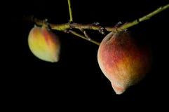 Peaches at Night Royalty Free Stock Photos