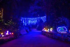Nightview украшений Mystica на сафари ночи Стоковая Фотография RF