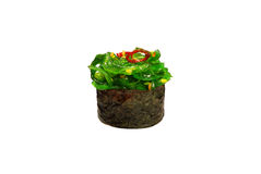 Nigiri hiyashi wakame Royalty Free Stock Photography