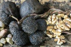 Nigra de Juglans, la noix noire orientale Image stock