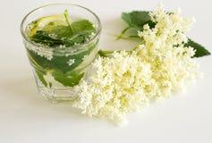 Nigra van vlierbessambucus infusie in water De bloemen en de bessen worden gebruikt vaakst medisch tegen griep en koorts, royalty-vrije stock fotografie