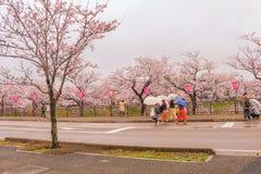 Niiagata, Japan - April 09, 2017: Mooie saku van de kersenbloesem Royalty-vrije Stock Foto's