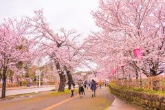 Niiagata, Japan - April 09, 2017: Mooie saku van de kersenbloesem Stock Foto