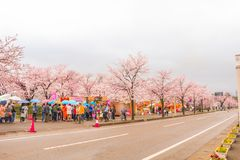 Niiagata, Japan - April 09, 2017: Mooie saku van de kersenbloesem royalty-vrije stock afbeelding