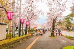 Niigata, Japonia - April 09, 2017: Piękny czereśniowego okwitnięcia sak Zdjęcia Stock