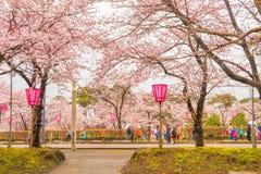 Niigata, Japonia - April 09, 2017: Piękny czereśniowego okwitnięcia sak Obrazy Stock