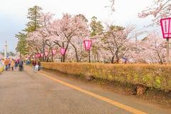 Niigata, Japonia - April 09, 2017: Piękny czereśniowego okwitnięcia saku Zdjęcia Stock