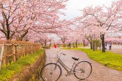 Niigata, Japonia - April 09, 2017: Piękny czereśniowego okwitnięcia Sof Fotografia Royalty Free