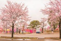 Niigata, Japonia - April 09, 2017: Piękny czereśniowy okwitnięcie, sa Zdjęcie Royalty Free