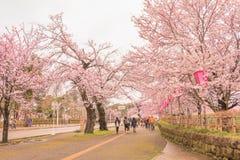 Niigata, Japonia - April 09, 2017: Piękny czereśniowy okwitnięcie, sa Zdjęcie Stock