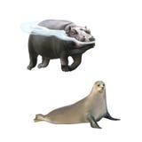 Nijlpaard die in het water zwemmen, zadelrob stock illustratie
