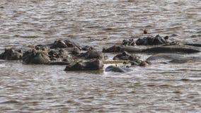 Nijlpaard in het meer royalty-vrije stock afbeelding