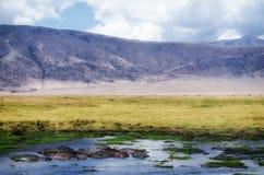 Nijlpaard, Ngorongoro-Krater Royalty-vrije Stock Foto's