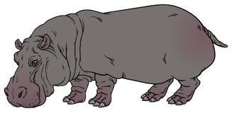 Nijlpaardamphibius of rivierpaard Stock Afbeelding