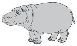 Nijlpaardamphibius of rivierpaard Royalty-vrije Stock Afbeelding