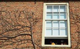 Nijmegen - dutch building with climbing plants. Dutch house in Nijmegen with climbing plant Stock Photography