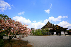 Nijo Castle with Beautiful Sakura. This flatland castle, located in Kyoto, is captured with clear sky and beautiful sakura royalty free stock photography