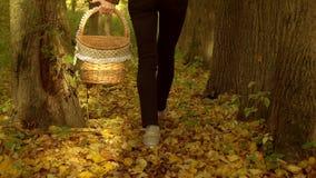 Nikły dziewczyny odprowadzenie na spadać liściach przez jesień lasu trzyma pyknicznego kosz Zwolnionego tempa steadicam strzał zbiory