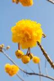 Nika blommor Arkivbild