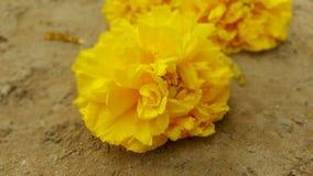 Nika koloru żółtego kwiaty Obrazy Stock