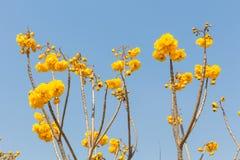 Nika kwiaty Fotografia Royalty Free