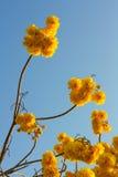 Nika kwitnie z niebem Obrazy Stock