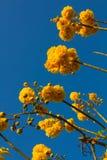 Nika kwitnie z niebem Obrazy Royalty Free