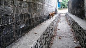 Nikaragua miejsca przeznaczenia Turystyczny pies w alei plaży miasteczku Ameryka Środkowa Zdjęcia Royalty Free