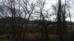 Nikczemni drzewa 2 Obrazy Royalty Free