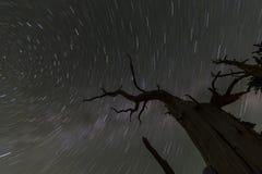 Nikczemni drzewo gwiazdy ślada Zdjęcia Royalty Free