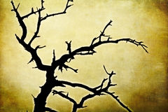 Nikczemny nieżywy drzewo na grunge tle Fotografia Stock