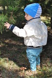 Nikita with pine-tree. Nikita walking in parkand acquainted with pine-tree, Donetsk, Ukraine Royalty Free Stock Image