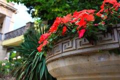 Nikitsky Botanical Garden. Crimea stock image