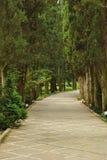 Nikitsky botanisk trädgård royaltyfria bilder