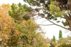 Nikitsky botanisk tr?dg?rd Frodig tjock vegetation av gammal h?rlig gr?splan parkerar med olikt tr?d, v?xter och dekorativt arkivbilder