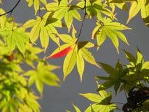 Nikko in autumn Stock Photography